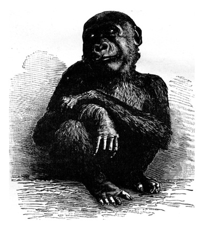 history month: The gorilla of the Museum of Paris a month before his death, vintage engraved illustration. Earth before man – 1886. Stock Photo
