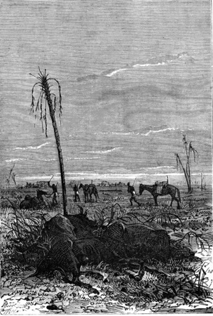 burden: Already some beasts of burden, vintage engraved illustration. Jules Verne 3 Russian and 3 English, 1872.