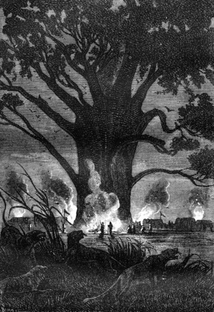black and white forest: Large fires, vintage engraved illustration. Jules Verne 3 Russian and 3 English, 1872.