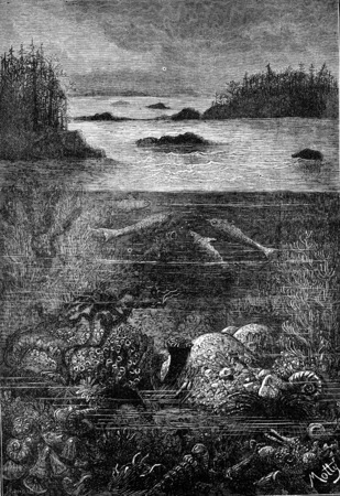 fish water: The main inhabitants of the land during the Devonian period. The world before the creation of man, vintage engraved illustration. Earth before man – 1886.