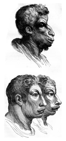 resemblance: Ox, camel, vintage engraved illustration. Earth before man – 1886. Stock Photo
