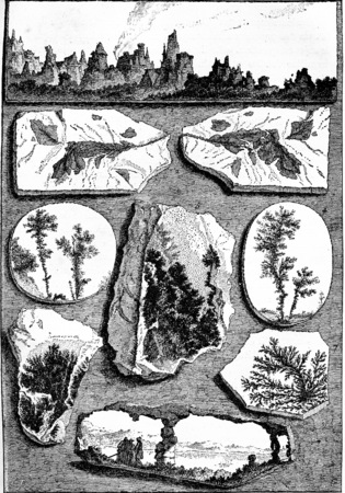 Arborise curious stones, vintage engraved illustration. Earth before man – 1886.
