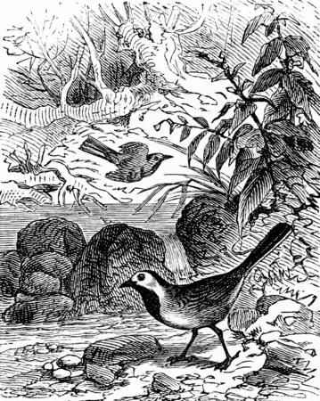 Louisiana, vintage engraved illustration. La Vie dans la nature, 1890.
