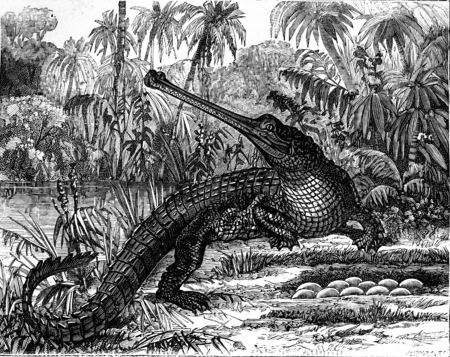 Viviparous generation comes from oviparous generation. Oviparous quadrupeds, Crocodiles and eggs, vintage engraved illustration. Earth before man – 1886. Stock Photo