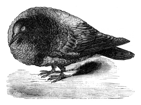 lobes: Pigeon after ablation of the cerebral lobes, vintage engraved illustration. Earth before man – 1886.