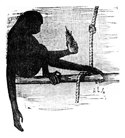 primate biology: Gluttony, vintage engraved illustration. Earth before man – 1886.