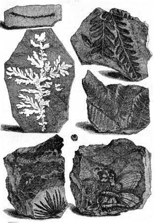 Slates bearing fossils, vintage engraved illustration. Earth before man – 1886. Stock Photo
