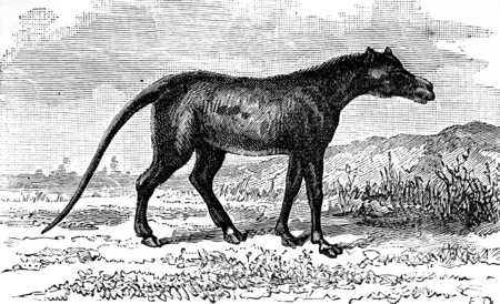 Anoplotherium、始新世の期間、ビンテージの刻まれた図の哺乳動物の象。男-1886年前に地球。