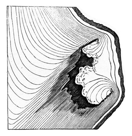 Herstel door het genezen van een dode en rote tak, vintage gegraveerde illustratie. Stockfoto