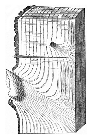 tron: State of a portion of Oak tron after falling branches, effected following the natural process, vintage engraved illustration. Stock Photo