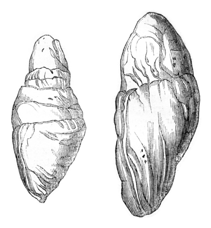morphology: Other Coprolites Lyme, vintage engraved illustration. Magasin Pittoresque 1844. Stock Photo