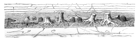 Cliff Portland, showing the black soil layer of pebbles, vintage engraved illustration. Magasin Pittoresque 1844.
