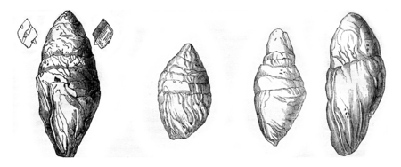 winding: Coprolite the Lias at Lyme Regis, Other Coprolites Lyme, vintage engraved illustration. Magasin Pittoresque 1844.