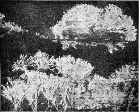 wood surface: Merulius mycelium spreads like a fan, the attack has wood surface, vintage engraved illustration. Stock Photo