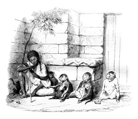 A Merchant of monkeys in Cairo, vintage engraved illustration. Magasin Pittoresque 1844. Imagens - 72301951