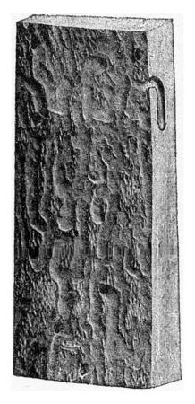 produced: Alteration produced by Callidium variabile on oak, vintage engraved illustration. Stock Photo