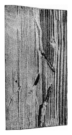 Fragment of a wooden throne of spruce age of about sixty, vintage engraved illustration. Stok Fotoğraf