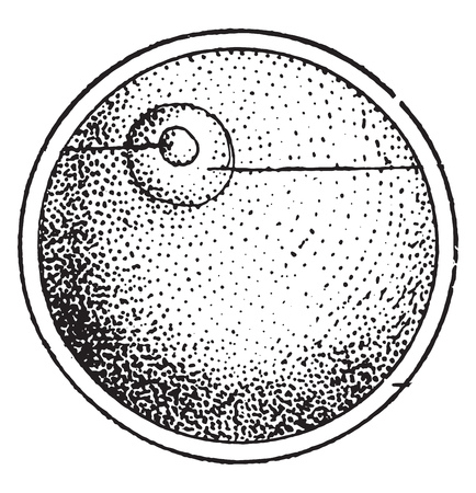 The Cell, the elementary egg of all organized beings, vintage engraved illustration. From Natural Creation and Living Beings.