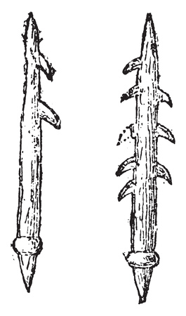 Harpoons or barbed arrows, vintage engraved illustration. From Natural Creation and Living Beings.