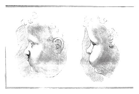 Unpublished drawings by Leonardo da Vinci, vintage engraved illustration. Magasin Pittoresque 1858. Illustration