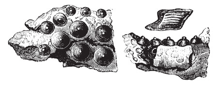 Palace of fish Lepidotus, pavement of conical teeth, vintage engraved illustration. Magasin Pittoresque 1858. Illusztráció
