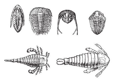 Cambrian and Silurian crustaceans, vintage engraved illustration. From Natural Creation and Living Beings.