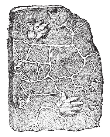 Footprints of a labyrinthodon, in the coal sandstone, vintage engraved illustration. From Natural Creation and Living Beings.