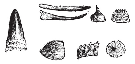 Offensive and defensive weapons of Devonian Pisces, vintage engraved illustration. From Natural Creation and Living Beings.