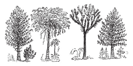 Reconstruction of the Great Plants of the Coal Period, vintage engraved illustration. From Natural Creation and Living Beings.