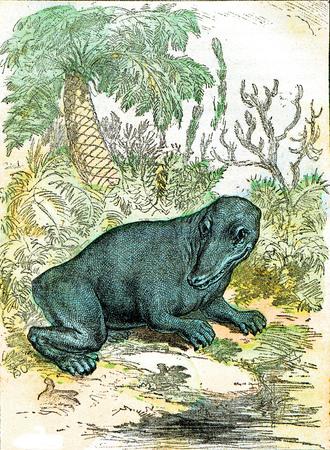 Das Labyrinthodon der Kohlezeit, Vintage gravierte Illustration. Aus natürlicher Schöpfung und Lebewesen. Standard-Bild
