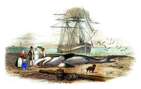 The shark, vintage engraved illustration. Natural History from Lacepede. Foto de archivo - 107851606