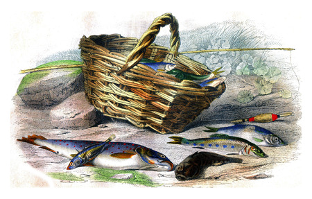Trout, The stickleback, The side chabot, The stud, The abatement, vintage engraved illustration. Natural History from Lacepede