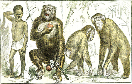Evolution of mammals towards the human type, vintage engraved illustration. From Natural Creation and Living Beings.