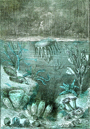 Ideal view of the land and the seas at the beginning of the Silurian period 스톡 콘텐츠