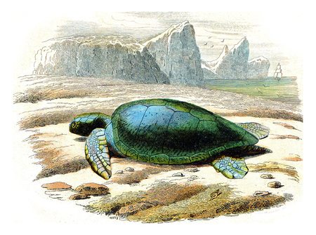 The frank turtle, vintage engraved illustration. Natural History from Lacepede.