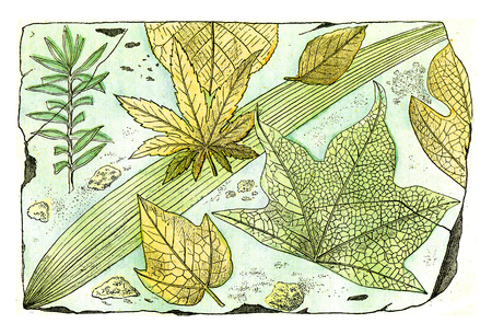 Queleues fruilles of the pliocene forest of the cantal, vintage engraved illustration. From Natural Creation and Living Beings.