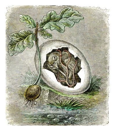First state of organized beings, The egg and the seed, vintage engraved illustration.
