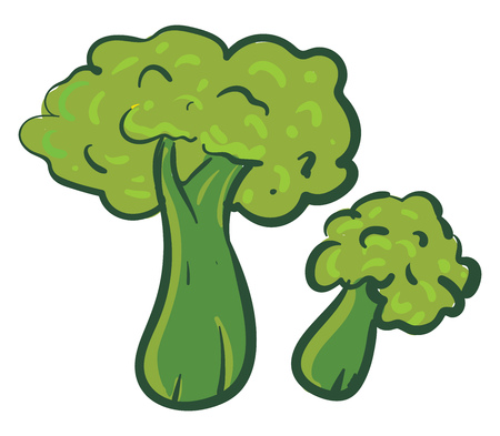 Simple broccoli vector illustration on white background.