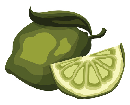 Green lime fruit with a slice vector illustration on white background.