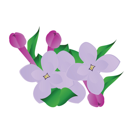Vector illustration of purple and violet lilac flowers with green leafs on white background. Illustration