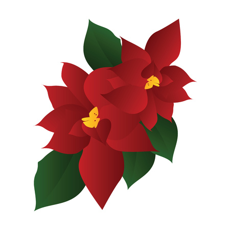 Vector illustration of red poinsettia flower with green leafs on white background. Vectores