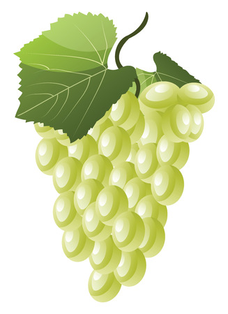 Cartoon of white grapes with green leaf vector illustration on white background.