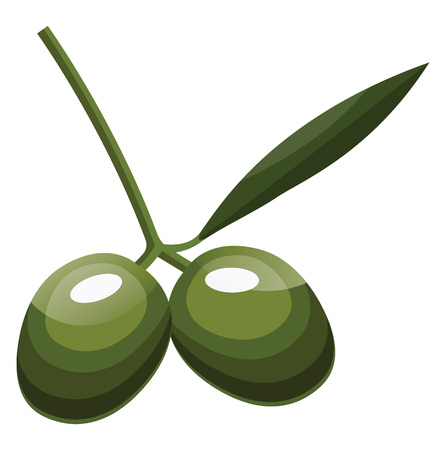 Cartoon of two green olives  with green leaf on a branch vector illustration on white background.