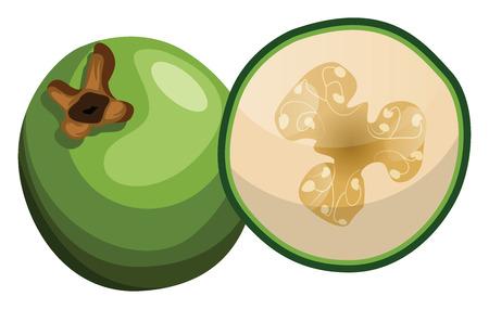 Cartoon of green raw fig half a fig vector illustration on white background. Иллюстрация
