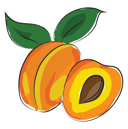 Eine ganze Aprikose mit zwei grünen Blättern, Vektor, Farbzeichnung oder Illustration.
