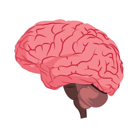 Anatomy deisign of human brain vector illustration on white background