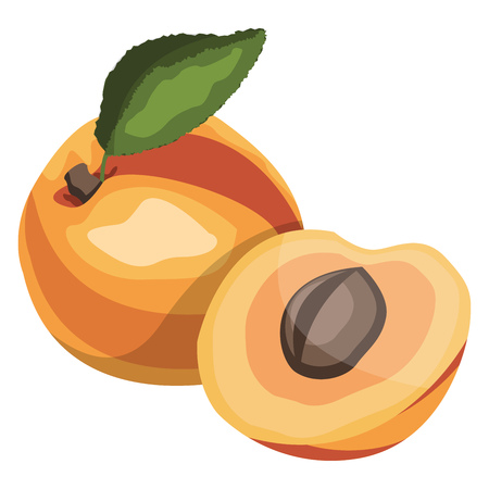 Apricot with  green leaf cartoon fruit vector illustration on white background.