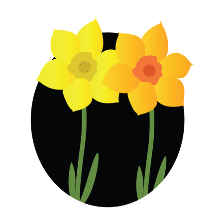 Vector illustration of yellow and orange jonquil flowers with green leafs black circle on white background. Ilustracja