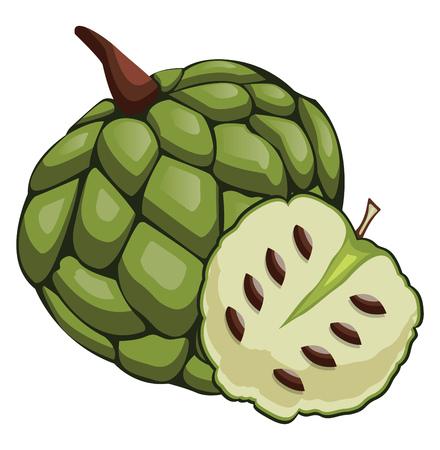 Green cherimoya cut in half cartoon fruit vector illustration on white background. Ilustrace