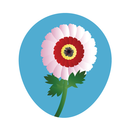 Vector illustration of white red and yellow chrysanthemum flower   on white background.